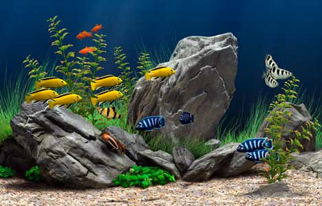 اسکرین سیور آکواریوم Dream Aquarium Screensaver